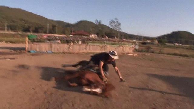 Chết cười với chú ngựa giả chết mỗi khi bị người cưỡi - 4