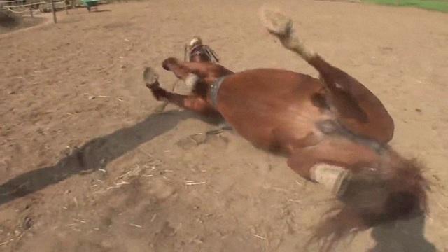 Chết cười với chú ngựa giả chết mỗi khi bị người cưỡi - 5