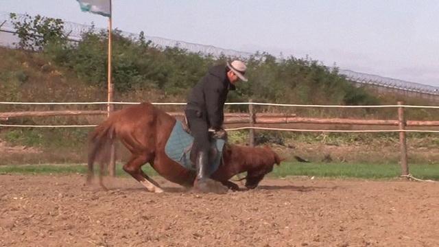 Chết cười với chú ngựa giả chết mỗi khi bị người cưỡi - 6