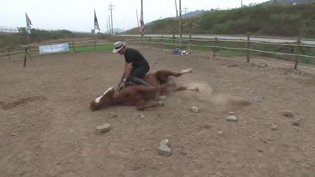 Chết cười với chú ngựa giả chết mỗi khi bị người cưỡi - 7