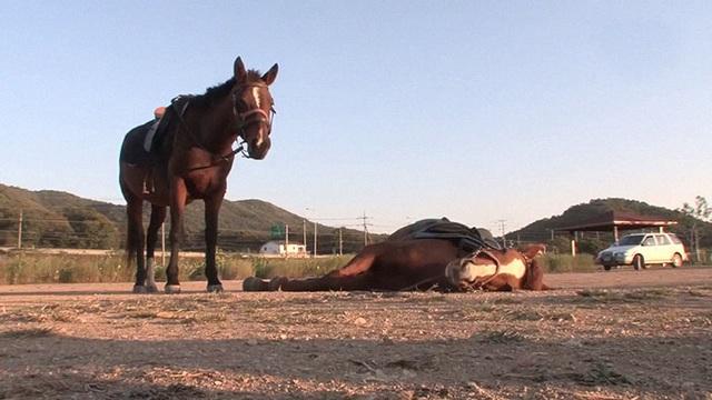 Chết cười với chú ngựa giả chết mỗi khi bị người cưỡi - 8