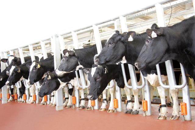 """TH Milk là doanh nghiệp Việt Nam đầu tiên được cấp mã số xuất khẩu sữa sang Trung Quốc:  """"Hoa thơm đã đơm trái ngọt"""" - 3"""