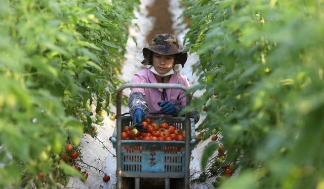 Việt Nam đứng thứ hai về số sinh viên được cấp thị thực làm việc tại Nhật Bản - 1