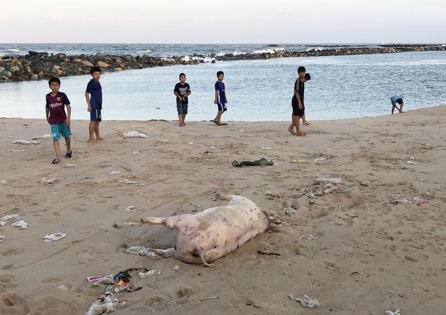 Phú Yên: Bãi biển TP. Tuy Hòa ngập rác sau mưa - 4