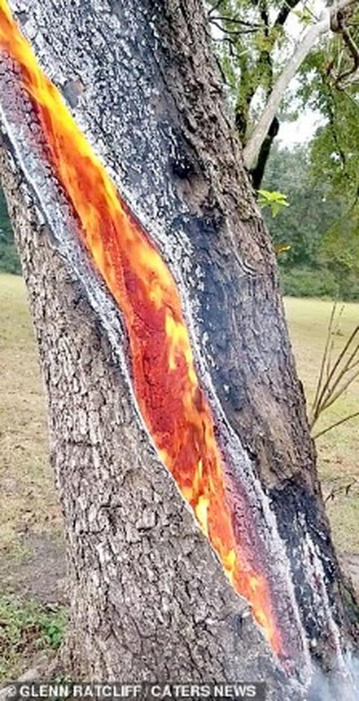 Kỳ lạ: Thân cây tách làm đôi và bốc cháy ngùn ngụt từ bên trong - 2