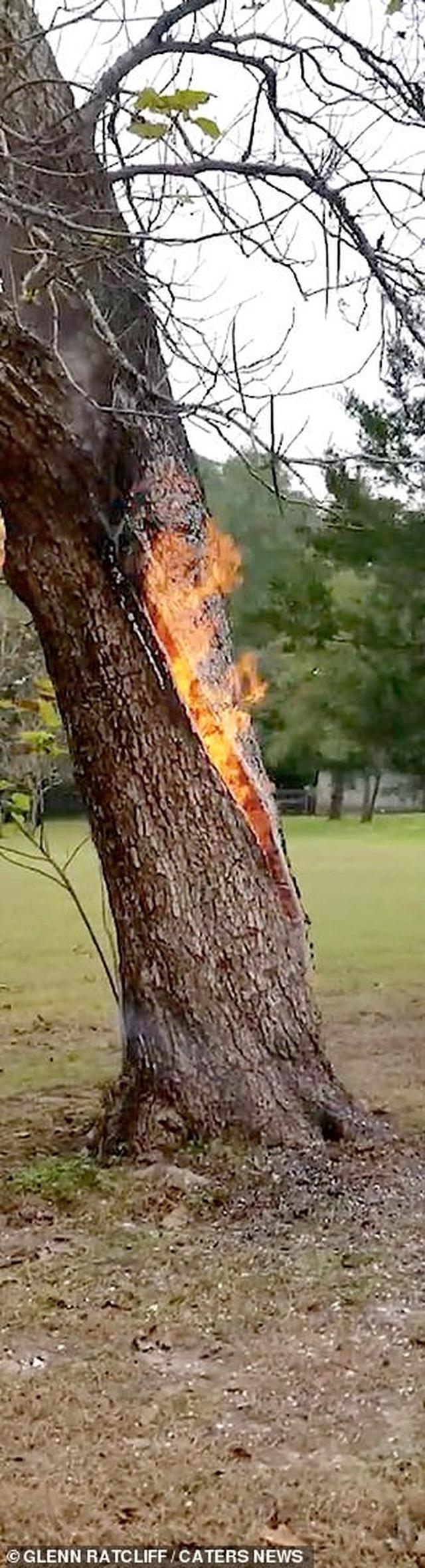 Kỳ lạ: Thân cây tách làm đôi và bốc cháy ngùn ngụt từ bên trong - 3