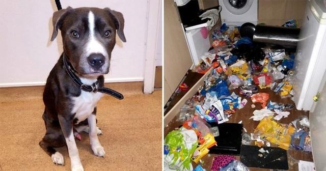 Chó ăn thịt mèo vì quá đói sau khi bị chủ bỏ lại ở nhà - 1