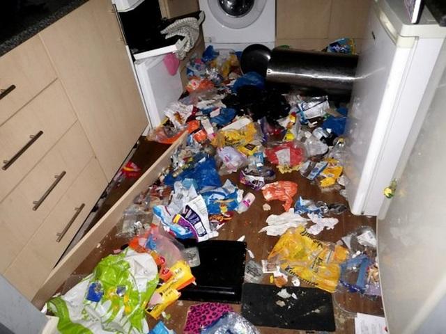 Chó ăn thịt mèo vì quá đói sau khi bị chủ bỏ lại ở nhà - 2