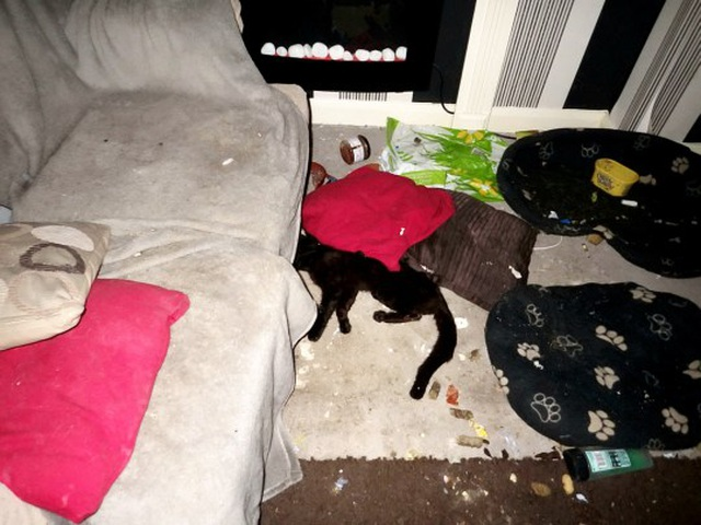 Chó ăn thịt mèo vì quá đói sau khi bị chủ bỏ lại ở nhà - 3