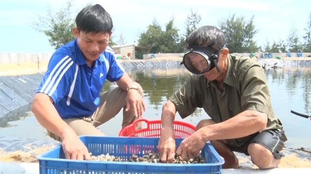 Anh nông dân Quảng Bình thu lãi 1,5 tỷ đồng mỗi năm nhờ nuôi ốc hương - 3
