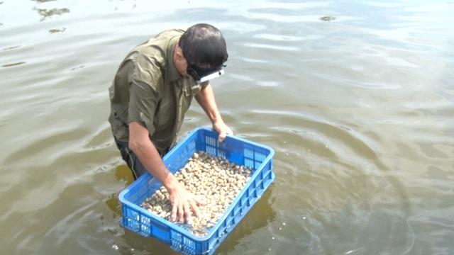 Anh nông dân Quảng Bình thu lãi 1,5 tỷ đồng mỗi năm nhờ nuôi ốc hương - 7