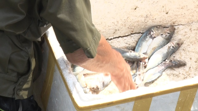 Anh nông dân Quảng Bình thu lãi 1,5 tỷ đồng mỗi năm nhờ nuôi ốc hương - 4