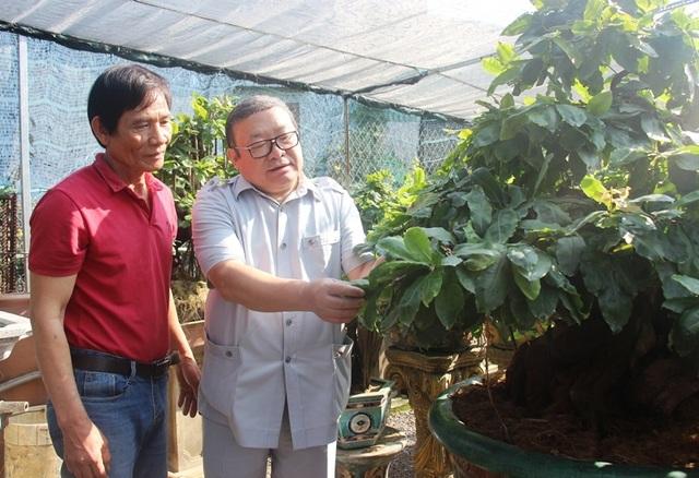 Nông dân mách nước trồng mai bonsai, thu nhập vài trăm triệu đồng mỗi năm - 3