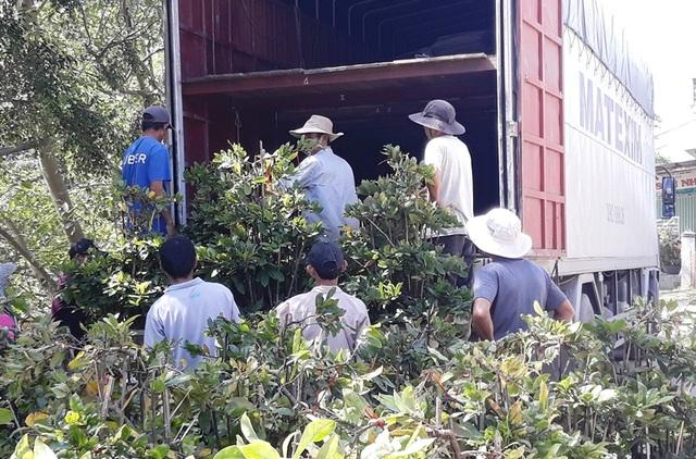 Nông dân mách nước trồng mai bonsai, thu nhập vài trăm triệu đồng mỗi năm - 2