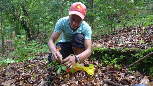 Thu hút đầu tư vào miền núi Quảng Nam