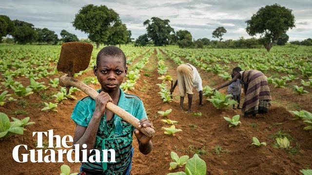 Lao động nô lệ trong các trang trại nông nghiệp ở châu Âu - 1