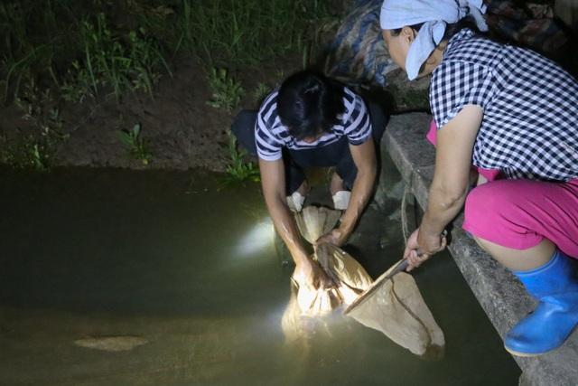 Hải Dương: Chong đèn đi săn lộc trời, kiếm hàng chục triệu mỗi đêm - 3