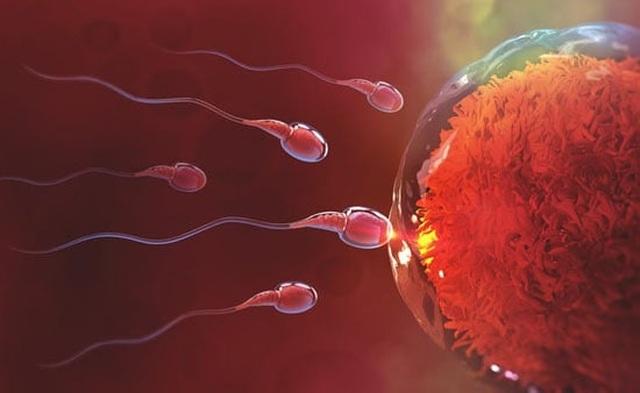 """Bạch Tật Lê – """"Dược liệu quý"""" cho người tinh trùng yếu đang mong con - 2"""
