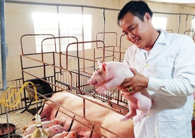 Mặc bão dịch, nhiều chủ trại chăn nuôi lợn vẫn tự tin tái đàn đón Tết - 1