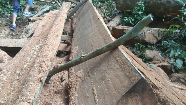 Vụ phá rừng Mang Yang: Phát hiện 2 hộ dân chặt cây về làm nhà - 1