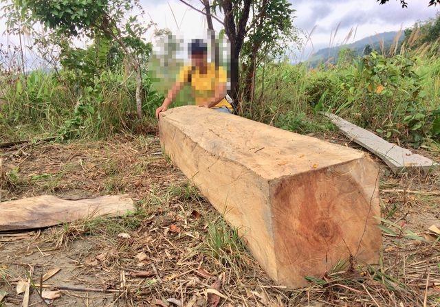 Yêu cầu kỉ luật chủ tịch huyện vì để xảy ra nhiều vụ phá rừng tại Gia Lai - 4