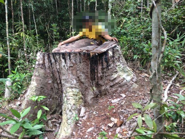 Yêu cầu kỉ luật chủ tịch huyện vì để xảy ra nhiều vụ phá rừng tại Gia Lai - 3