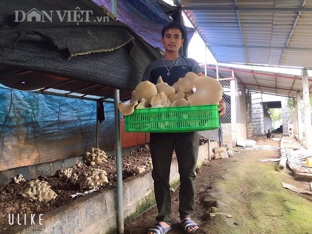 Nam Định: Kỹ sư địa chất về quê trồng đủ thứ nấm, lãi 400 triệu đồng/năm - 1
