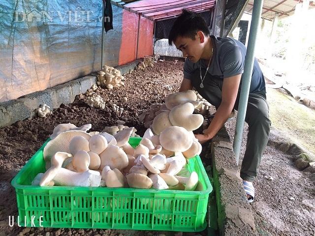 Nam Định: Kỹ sư địa chất về quê trồng đủ thứ nấm, lãi 400 triệu đồng/năm - 3