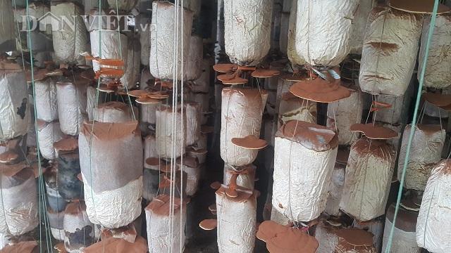 Nam Định: Kỹ sư địa chất về quê trồng đủ thứ nấm, lãi 400 triệu đồng/năm - 4