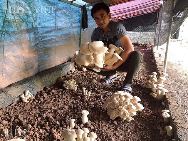 Nam Định: Kỹ sư địa chất về quê trồng đủ thứ nấm, lãi 400 triệu đồng/năm - 5