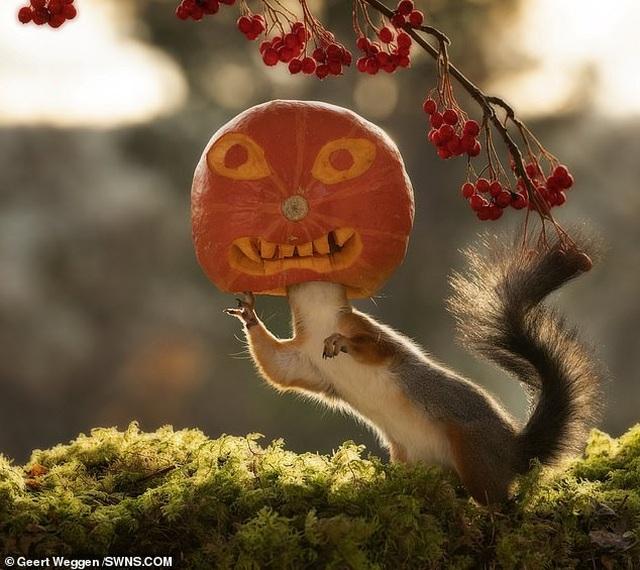 Khoảnh khắc đẹp của mùa thu: Sóc đi dự lễ hội Halloween - 1