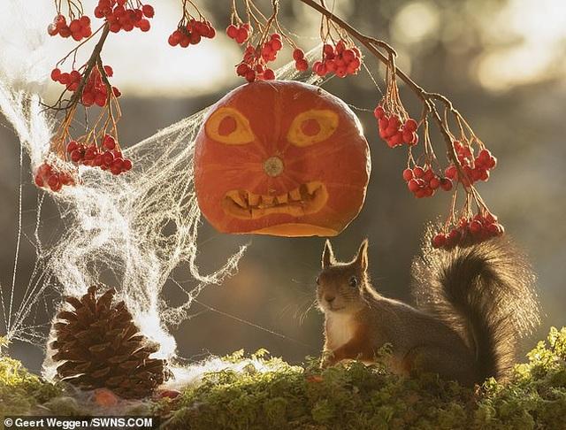 Khoảnh khắc đẹp của mùa thu: Sóc đi dự lễ hội Halloween - 2