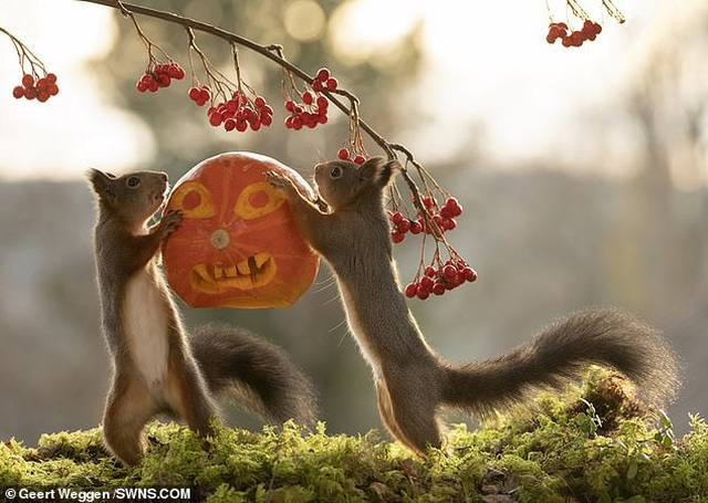 Khoảnh khắc đẹp của mùa thu: Sóc đi dự lễ hội Halloween - 3