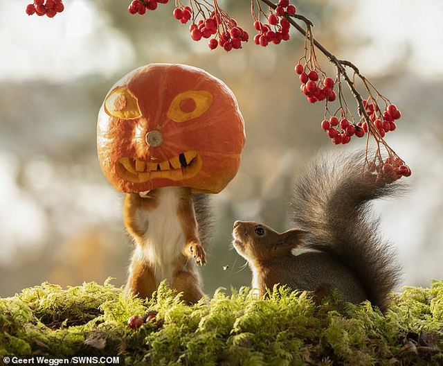 Khoảnh khắc đẹp của mùa thu: Sóc đi dự lễ hội Halloween - 4