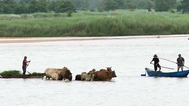 Phú Yên, Ninh Thuận hối hả phòng chống bão số 5 - 6