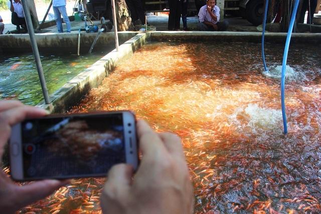 Nuôi bạt ngàn loài cá siêu đẹp, anh Luyện đút túi hơn 2 tỷ đồng mỗi năm - 7