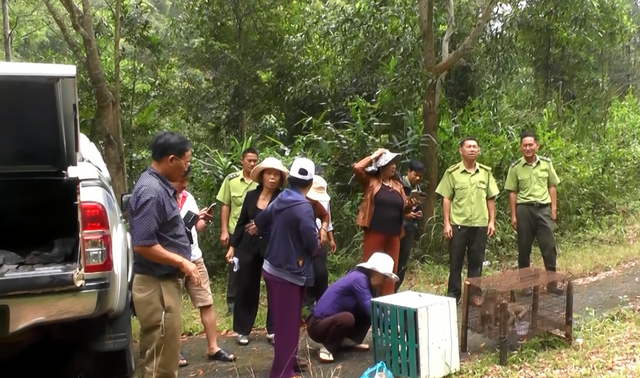 Thả 3 cá thể Khỉ đuôi lợn về Vườn quốc gia Chư Yang Sin - 1