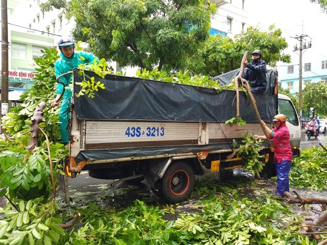 Cây xanh đổ đầy đường phố Đà Nẵng - 3