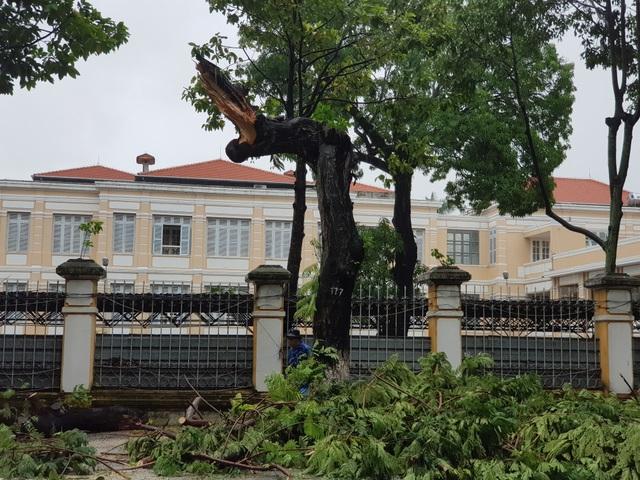 Cây xanh đổ đầy đường phố Đà Nẵng - 2