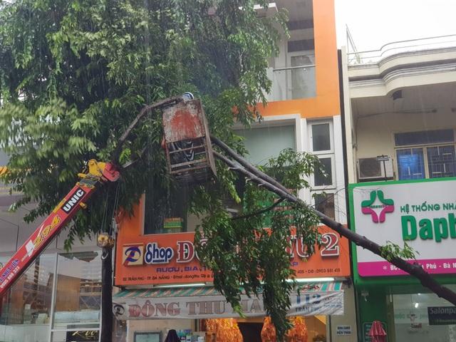 Cây xanh đổ đầy đường phố Đà Nẵng - 5