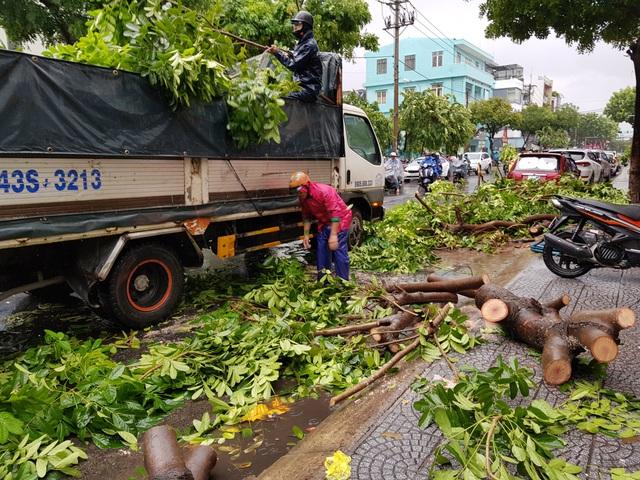 Cây xanh đổ đầy đường phố Đà Nẵng - 6