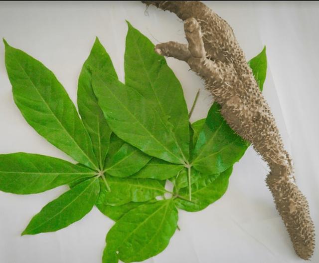 Detoxgan  hỗ trợ điều trị viêm gan, xơ gan hiệu quả từ các loại thảo dược thiên nhiên - 4