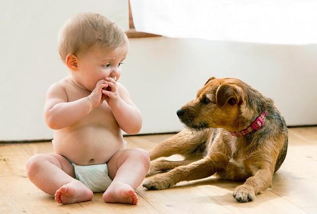 Giữ trẻ an toàn khi nhà nuôi chó - 1