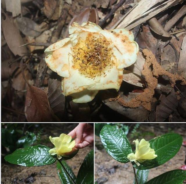 Trung tâm đa dạng sinh học bậc nhất Việt Nam đón nhận danh hiệu Vườn di sản ASEAN - 2