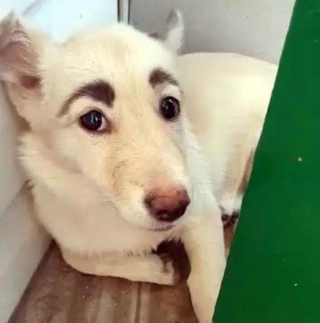 Chú chó có cặp lông mày cực đỉnh gây bão mạng xã hội - 1