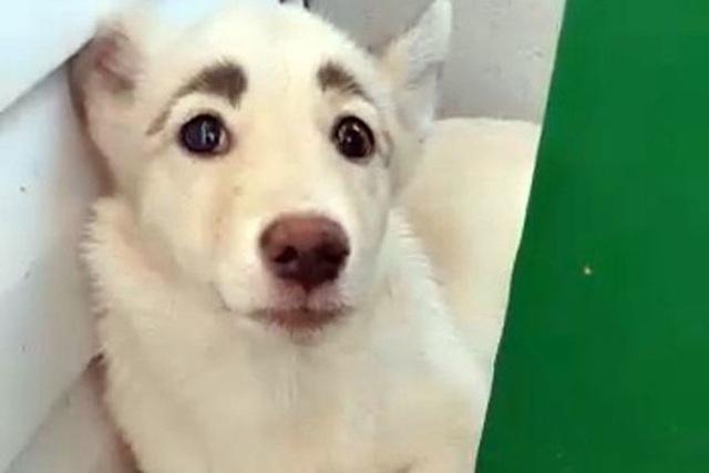 Chú chó có cặp