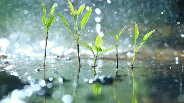"""Thực vật biết… """"hoảng loạn"""" khi trời mưa to - 1"""