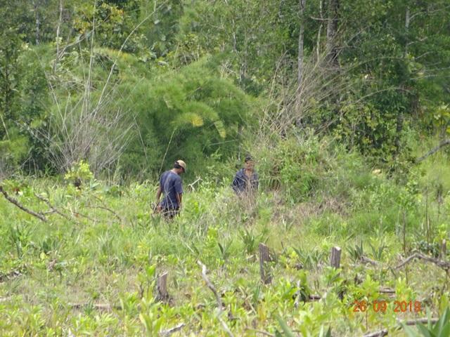 """Khởi tố trưởng ban quản lý rừng phòng hộ vì để """"mất rừng"""" - 1"""