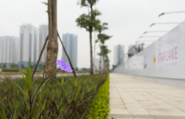 Hà Nội: Xuất hiện thêm thiên đường hoa sữa mới - 9