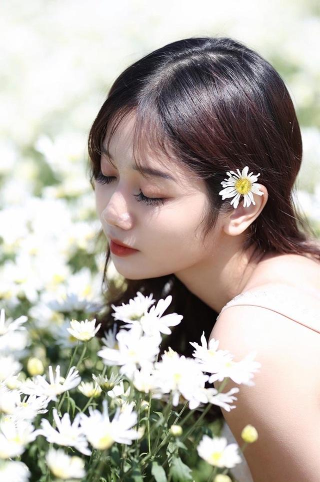 """""""Thiên thần ảnh thẻ"""" Lào Cai tinh khôi bên hoa cúc họa mi đầu mùa - Ảnh 3."""